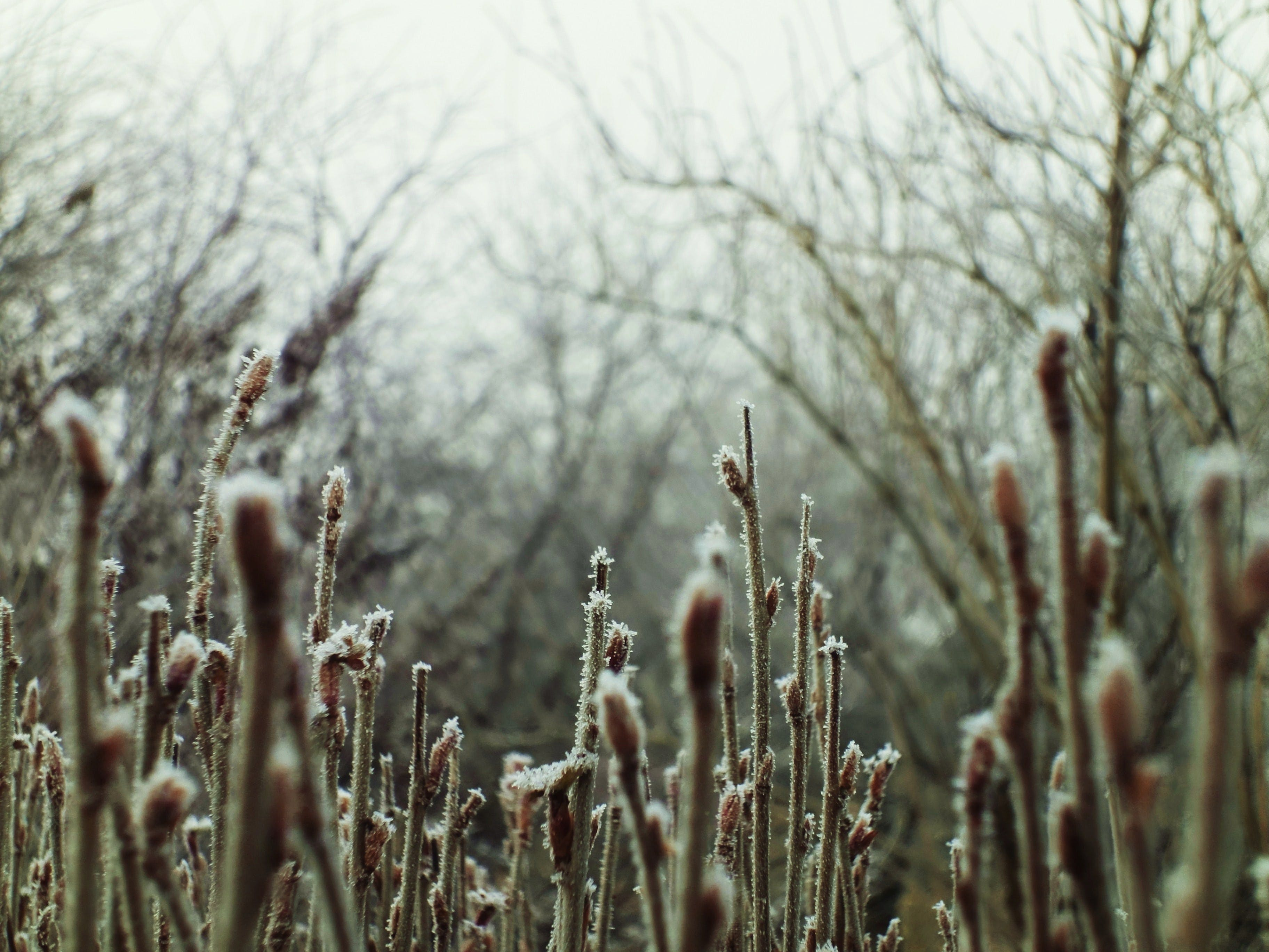 Free stock photo of branches, tree, bushes, frost
