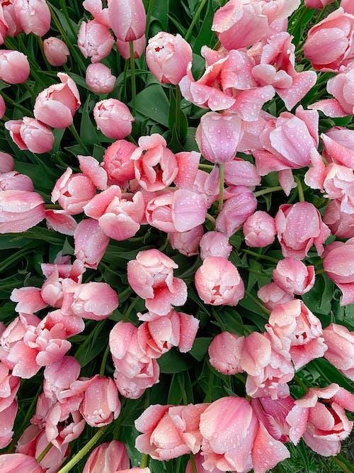 Photos gratuites de fleurir, fleurs, flore