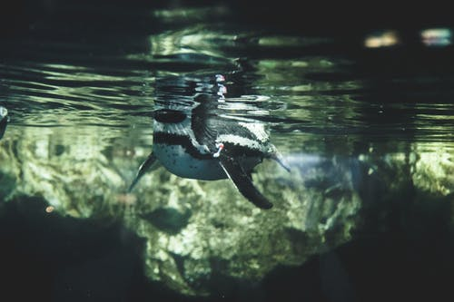 Free stock photo of aquarium, barcelona, blue water, clear water