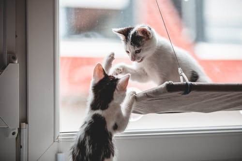 White and Black Cat on Window