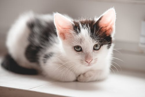 Close-Up View of a Cute Kitten