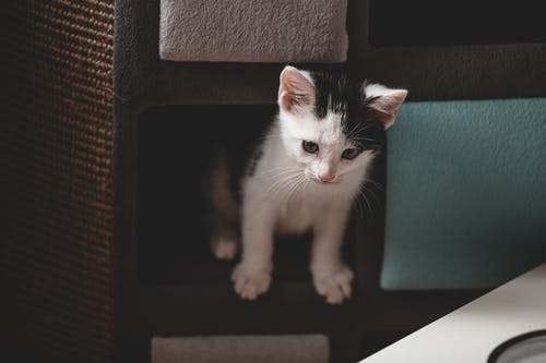 White and Black Kitten on Black and Brown Wooden Table