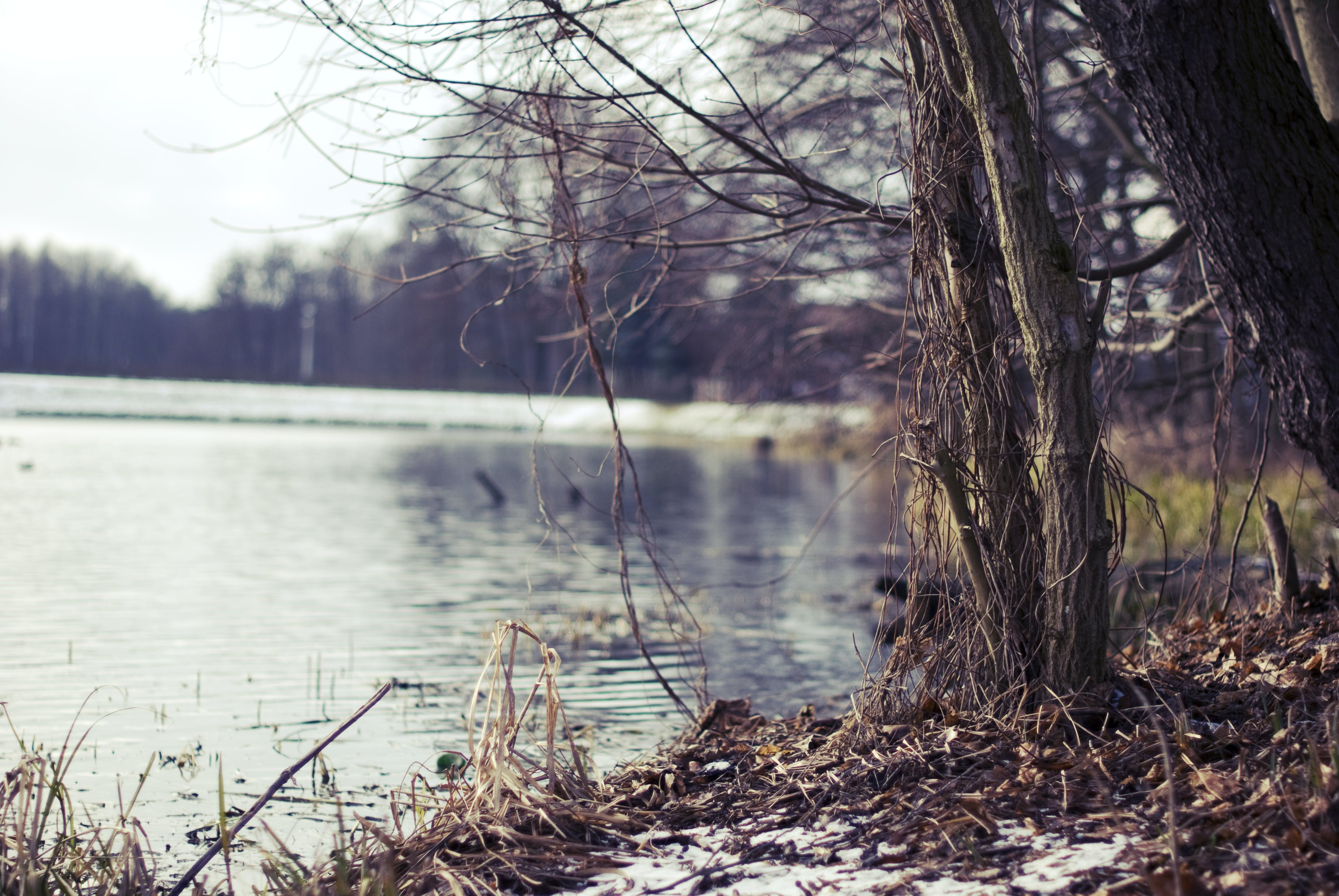 Free stock photo of river, trees