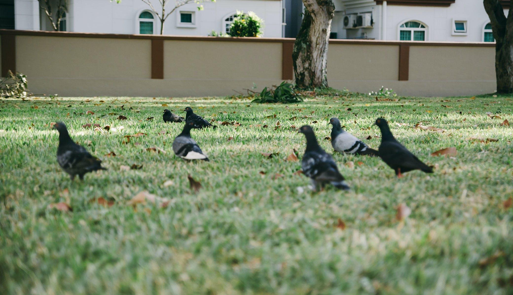 Free stock photo of grass, lawn, animals, birds