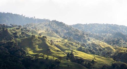 原本, 哥伦比亚, 夏天 的 免费素材图片