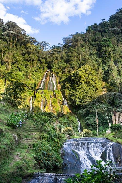 原本, 叢林, 哥伦比亚 的 免费素材图片