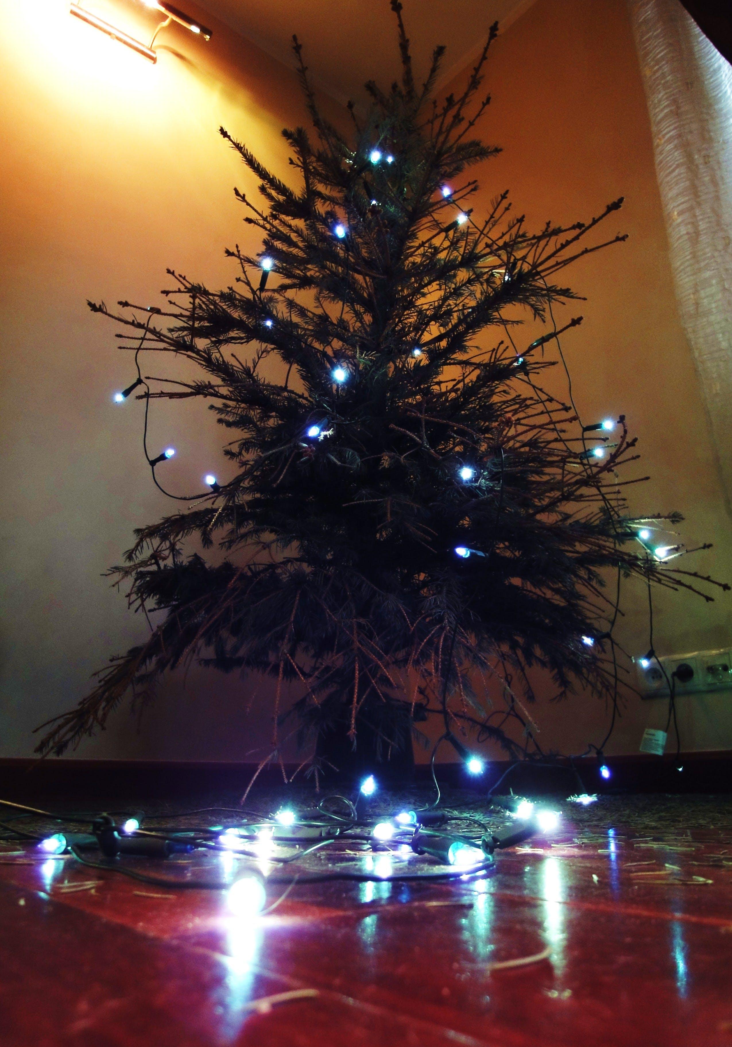 Free stock photo of christmas tree, lights, needle