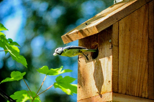 Free stock photo of flight, bird, flying, bird house