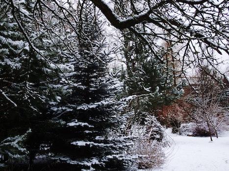 Free stock photo of snow, garden, winter, tree