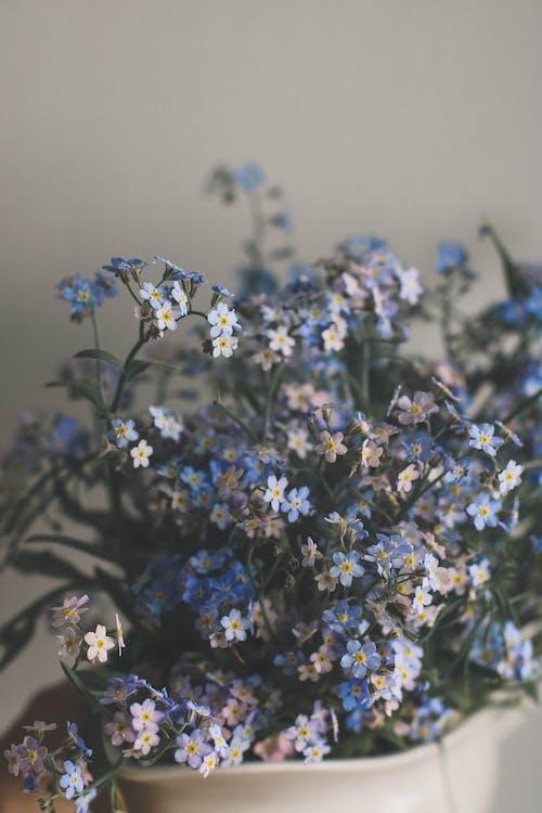 Ảnh lưu trữ miễn phí về cánh đồng, cánh hoa, hệ thực vật