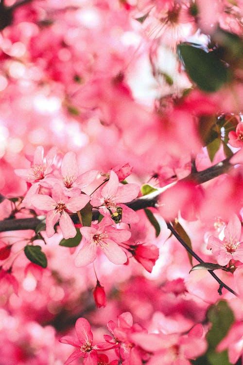 Ảnh lưu trữ miễn phí về cánh hoa, cây, chi nhánh