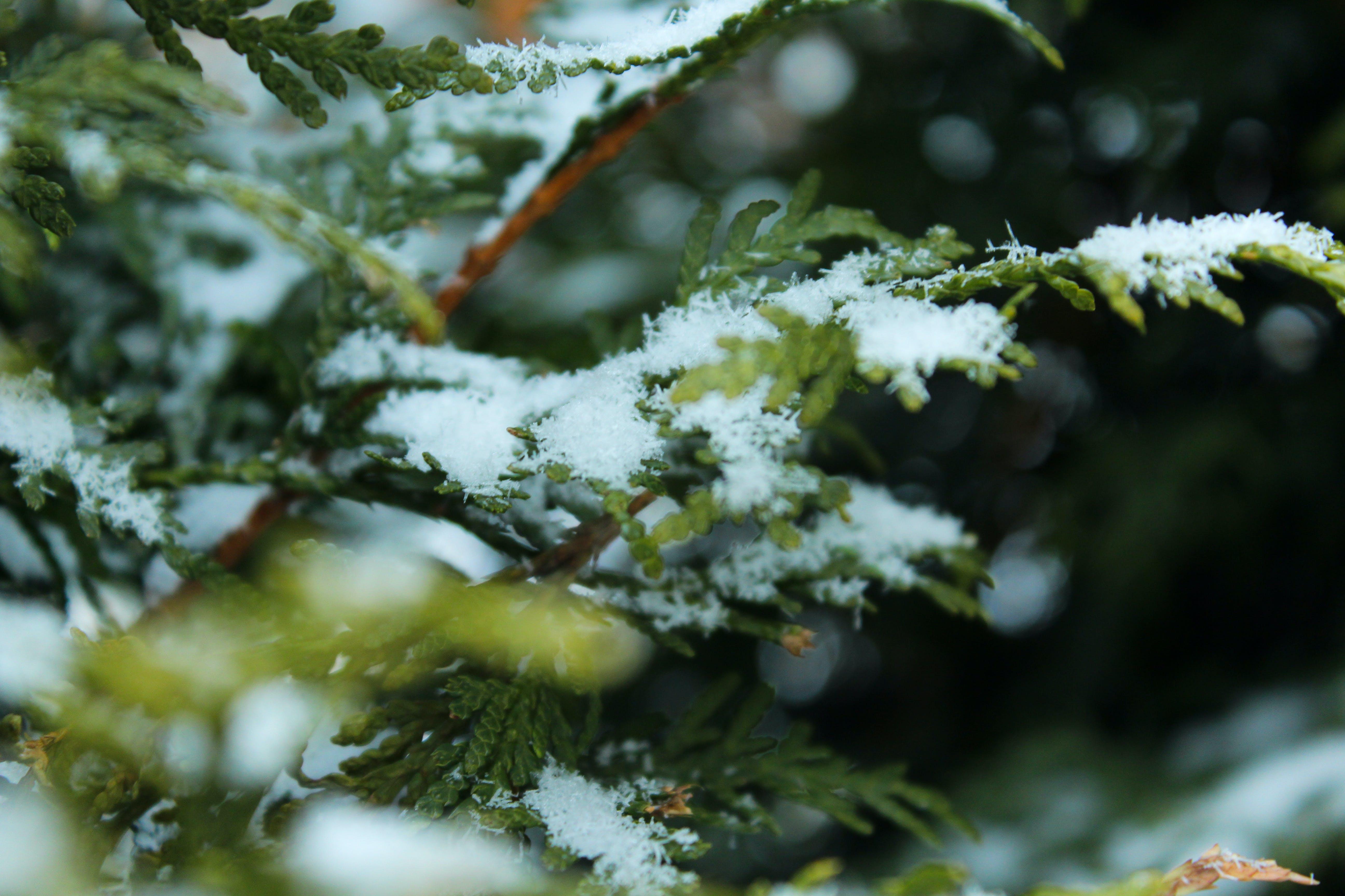 green, snow, white