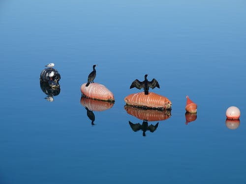Birds Perched On Buoys On Blue Water