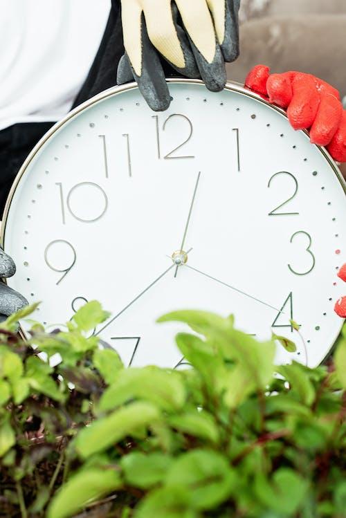 Foto stok gratis arloji, dari dekat, Daun-daun