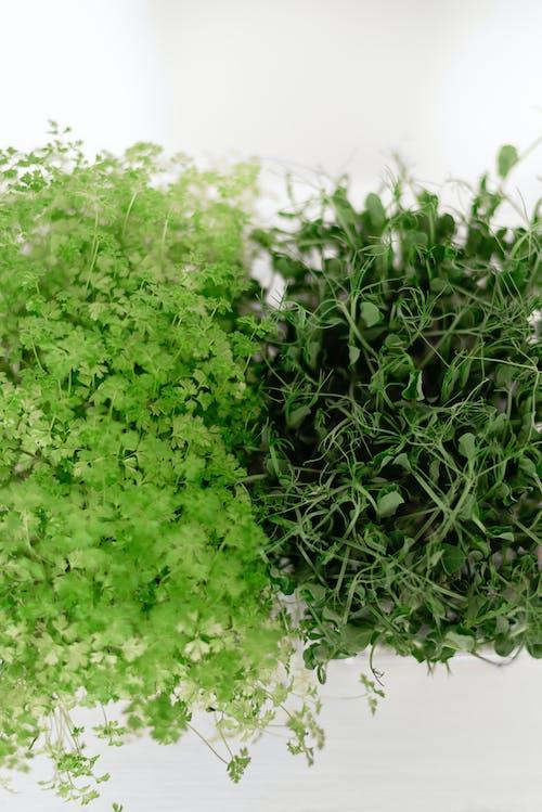 bitki, bitkibilim, botanik içeren Ücretsiz stok fotoğraf
