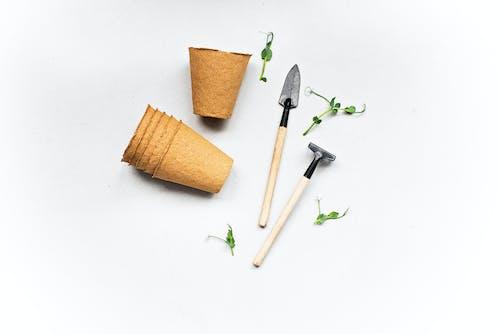 bahçe araç ve gereçleri, bitki, brüksel lahanaları içeren Ücretsiz stok fotoğraf