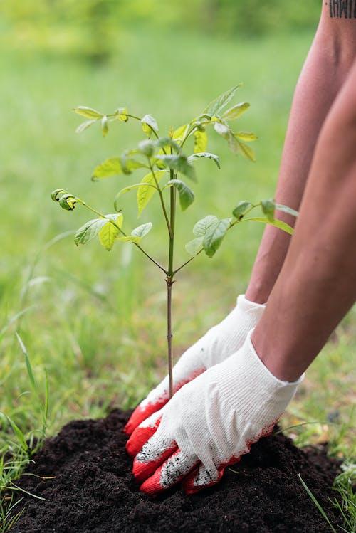 Безкоштовне стокове фото на тему «ботаніка, ґрунт, завод»
