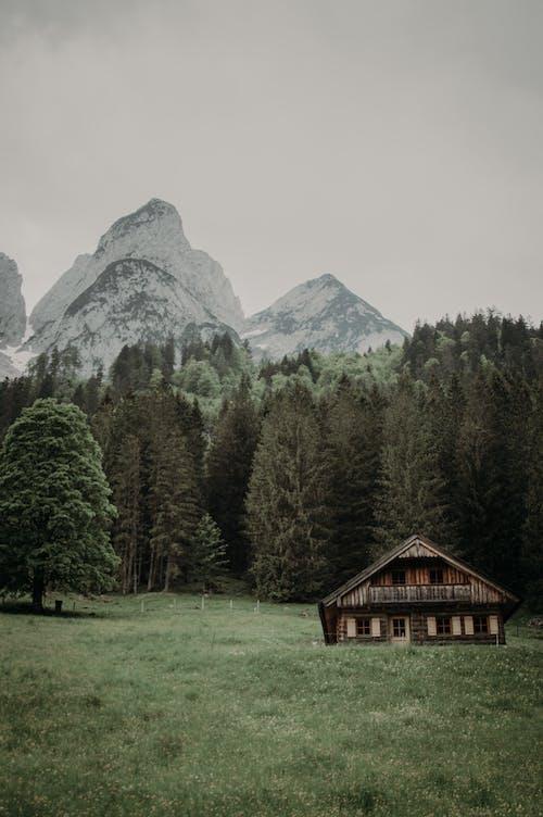 Free stock photo of bungalow, conifer, daylight