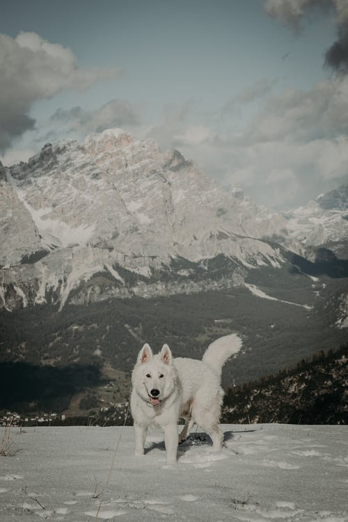 Free stock photo of adventure, cold, frosty