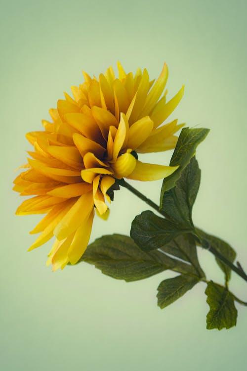 Fotos de stock gratuitas de amarillo, bonito, brillante