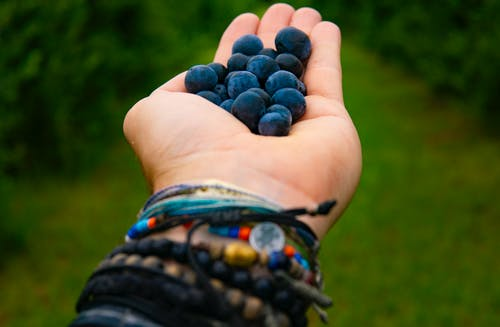 Person Holding Blue Berries
