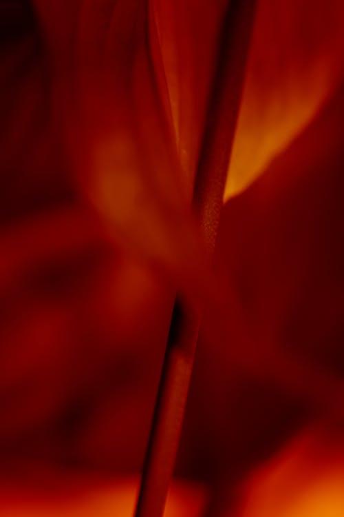 Foto stok gratis abstrak, api, artistik