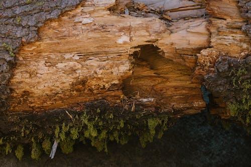 Brown Wood Log Beside Green Plants