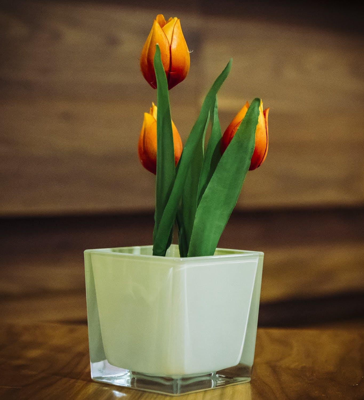Free stock photo of bloom, blossom, decoration, flora