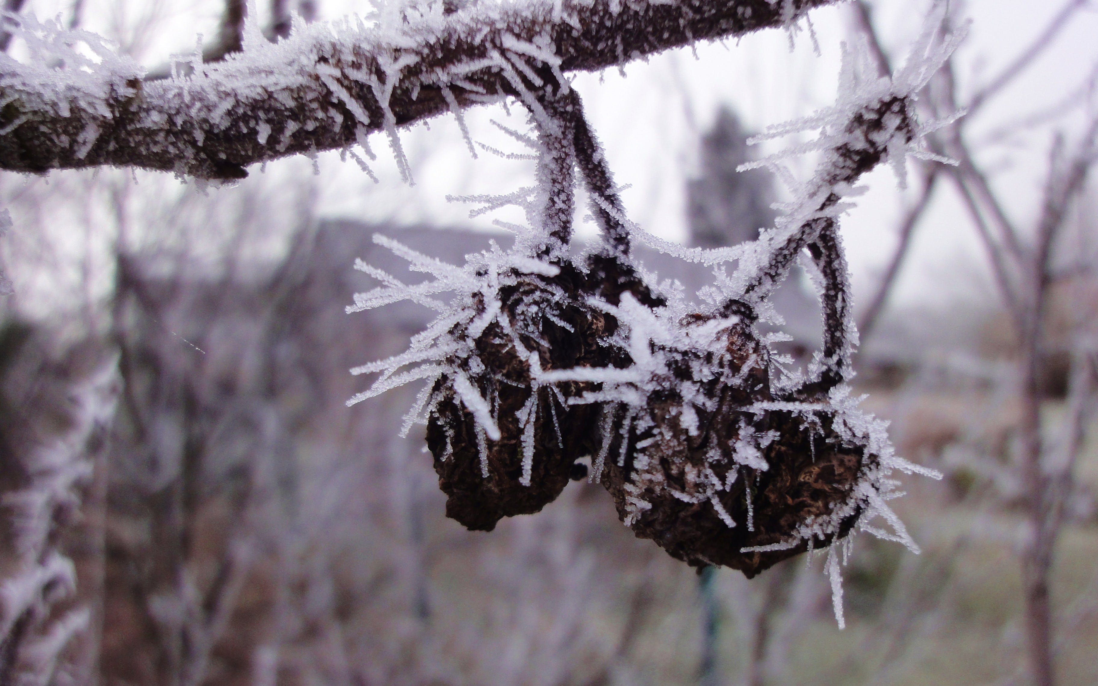 Free stock photo of winter, frost