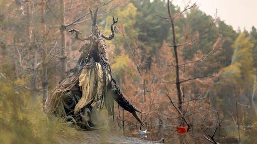 Photos gratuites de animal, arbre, automne