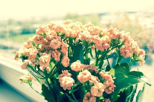 Ilmainen kuvapankkikuva tunnisteilla kasvikunta, kaunis, kukat, Kukka-asetelma