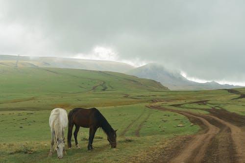 Black Horse on Brown Field