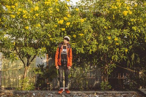 Gratis stockfoto met bladeren, bloemen, boom