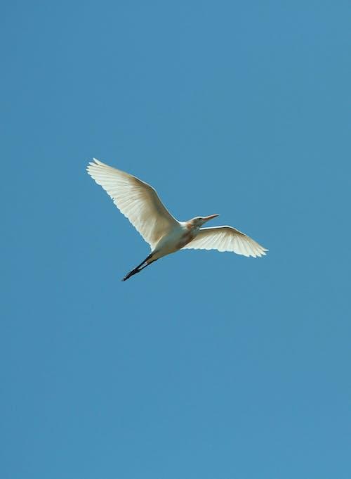 White Bird Flying Under Blue Sky
