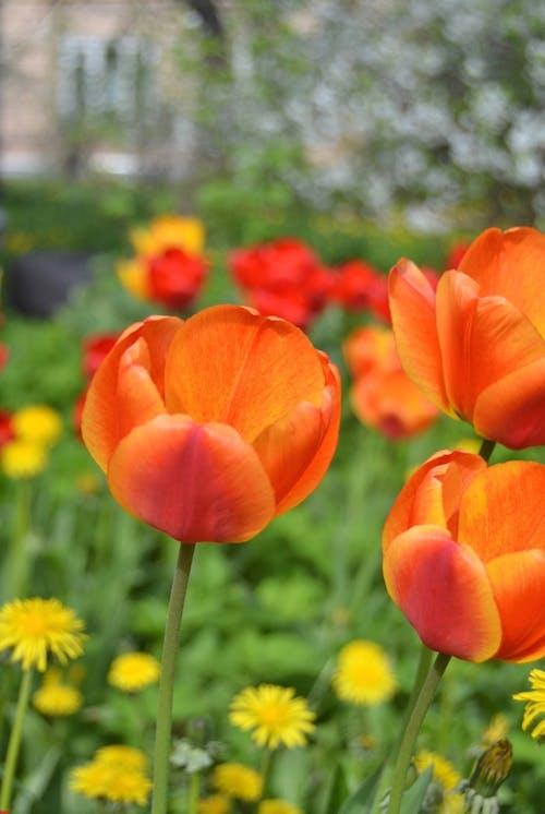 Photos gratuites de espace extérieur, extérieur, fleur