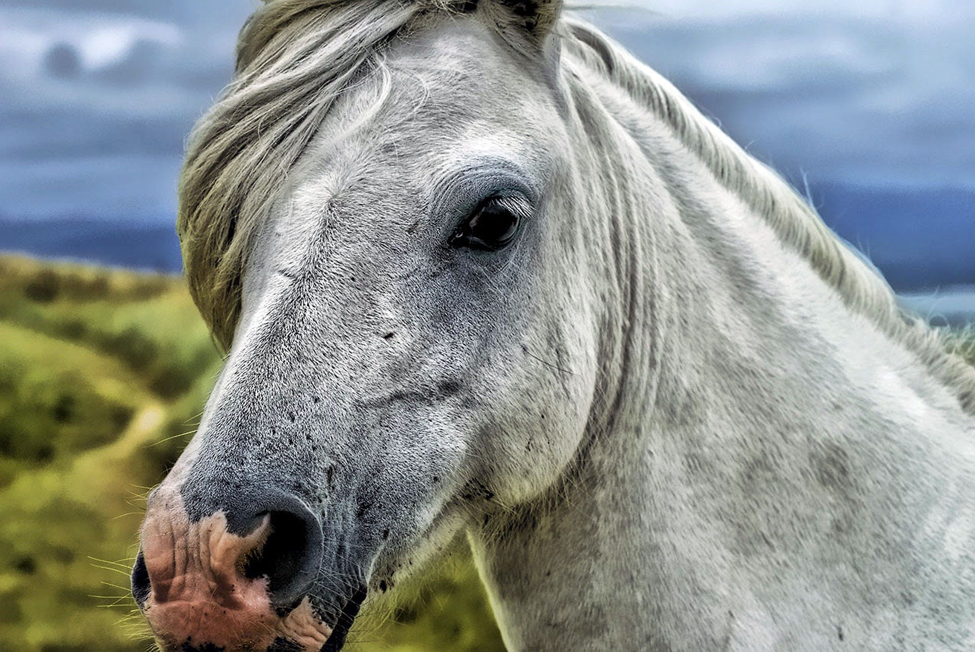 Close Up Photography of Gray and White Horse