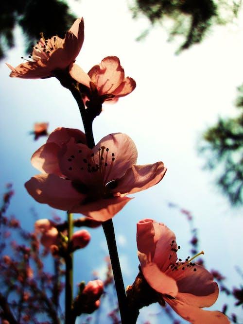 Základová fotografie zdarma na téma květiny, příroda
