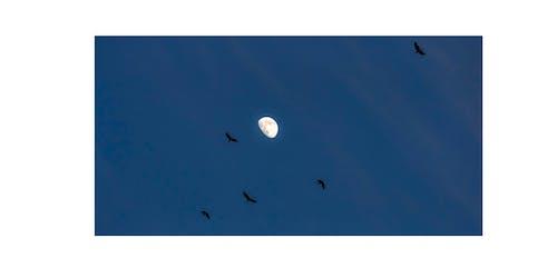 Free stock photo of half moon