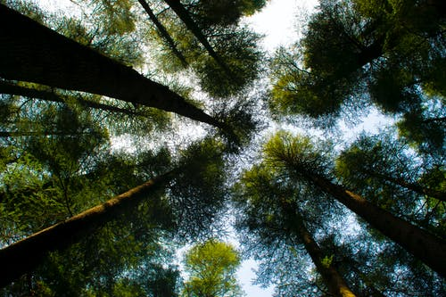 Low Angle Photography of Tall Green Trees