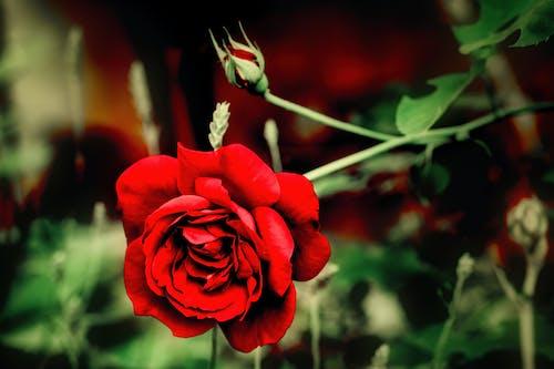 Kostenloses Stock Foto zu blumengarten, blüte, blüten-flora