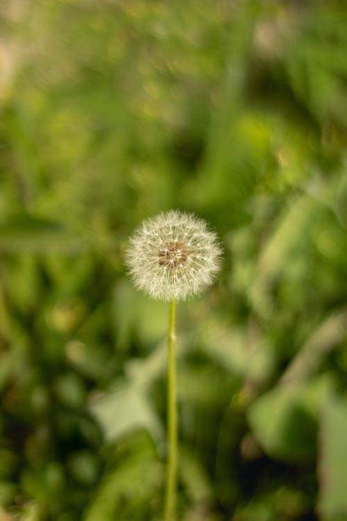 Kostnadsfri bild av bakgrund, blad, blomma