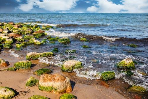 Green Algae On A Rocky Beach