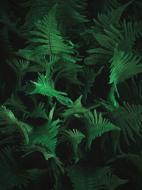 Immagine gratuita di avvicinamento, botanica, botanico