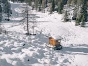 cold, snow, trees