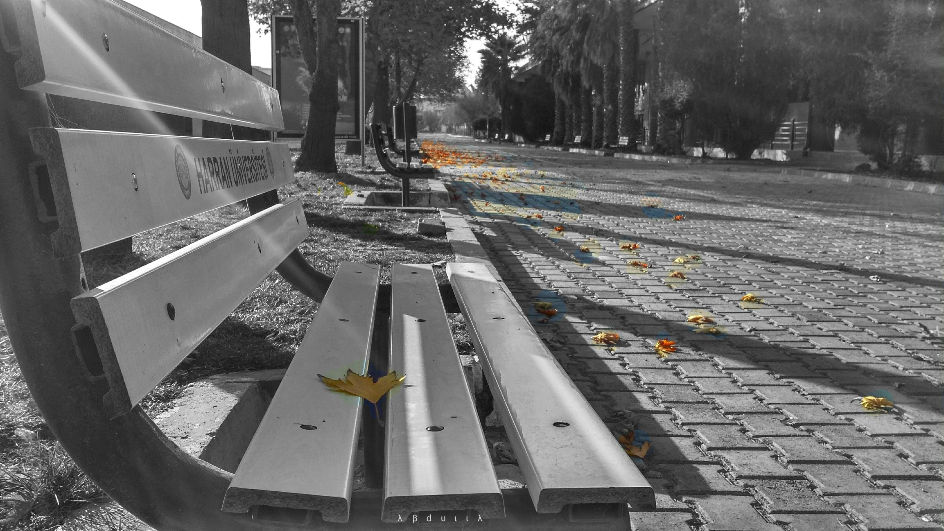 Free stock photo of alone, autumn, fall, HTC
