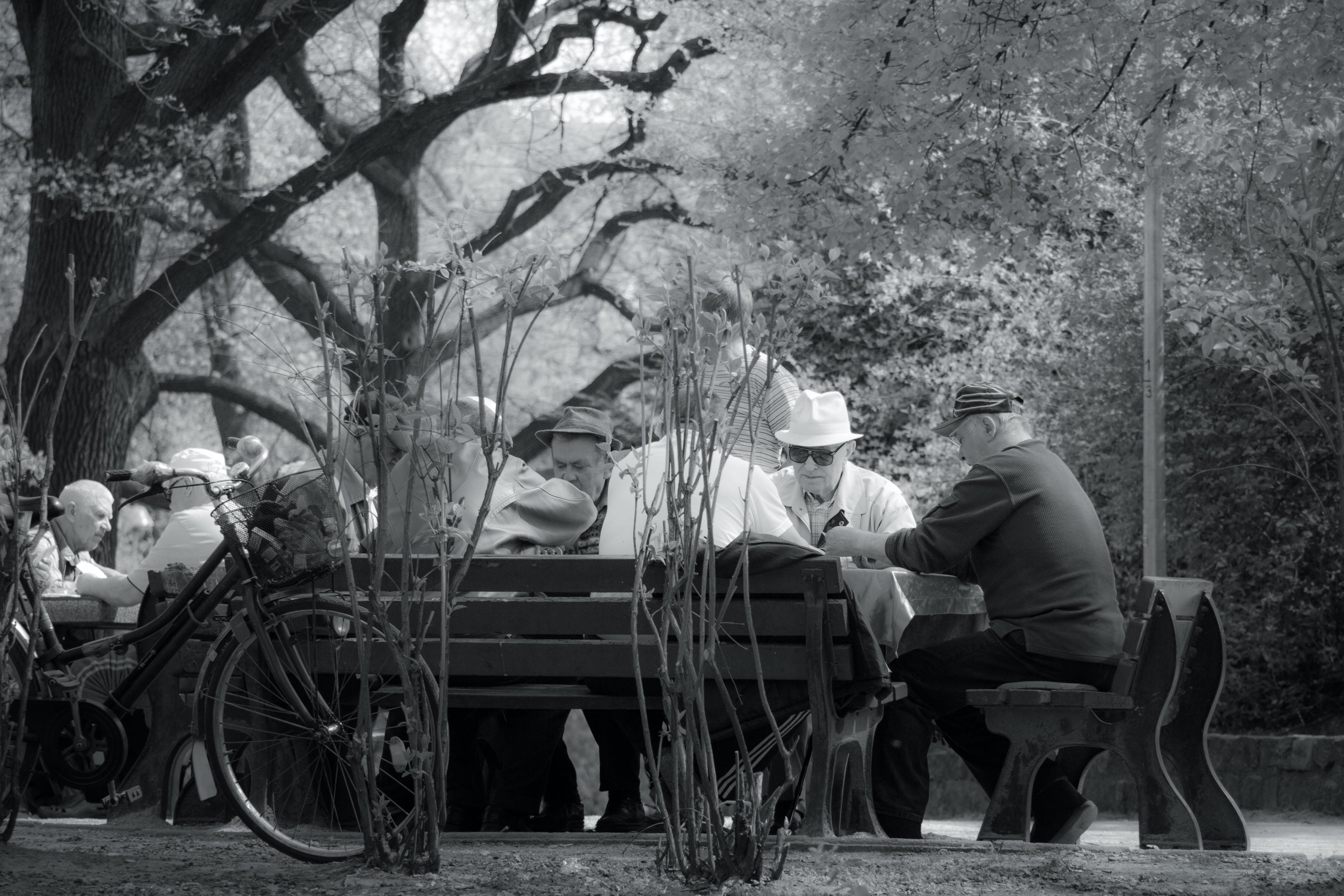 Men Sitting on Wooden Chairs Under Tree