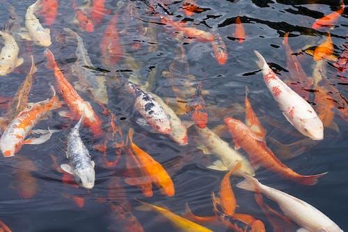 School of Fishes Underwater