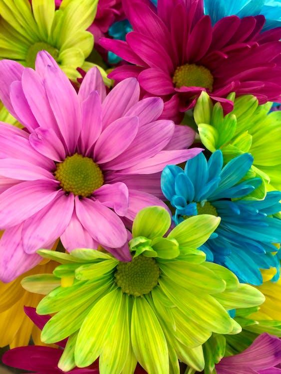 총 가까이에 분홍색 빨간색 노란색 꽃잎이 달린 꽃