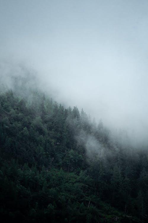 Kostenloses Stock Foto zu @draussen, baum, berg