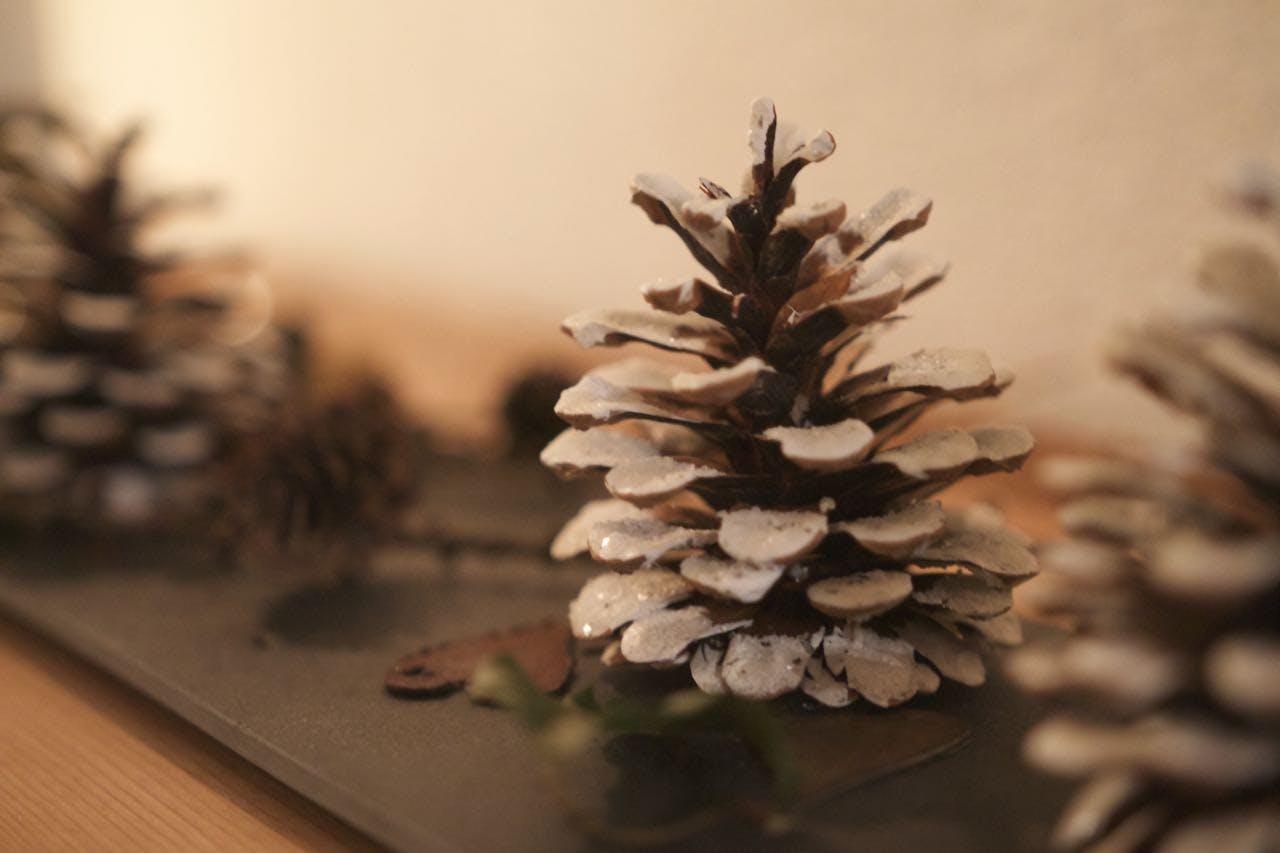 Free stock photo of decoration, pine cone, snow, winter